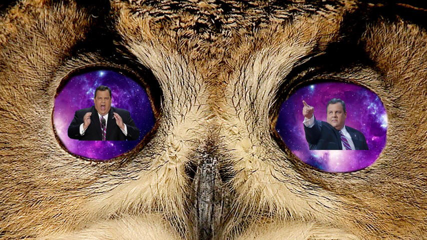 Infinite Owl Christie